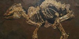 48 Million Years Horse Fetus found in Germany