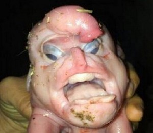 Alien Baby Pig Born with PENIS on Its Head