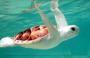 A Rare Albino Turtle Found on Australia Beach