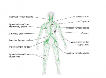 Lymphoma Symptoms, Treatment and Prevention
