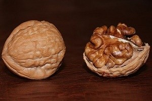walnut, walnuts