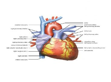Cardiac arrhythmia Symptoms, Treatment and Prevention