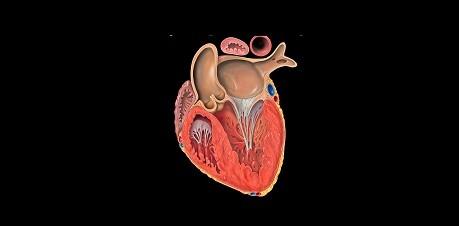 Heart Disease, Heart Disease treatment