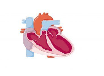 Heart Failure Symptoms, Treatment, Prevention
