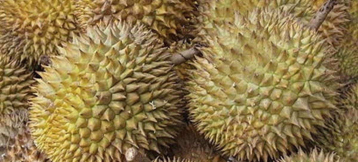 Durian Health Benefits and Nutrition Facts