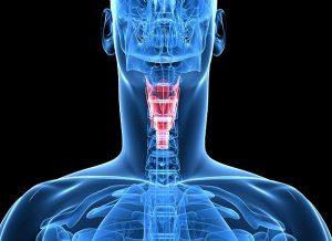 Artificial vocal cords