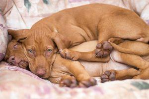 Cuddle bug position