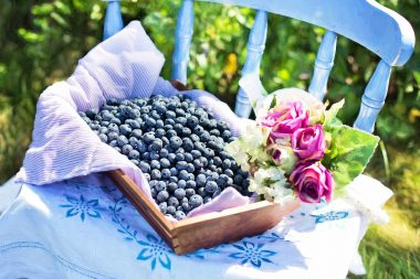 blueberry benefits