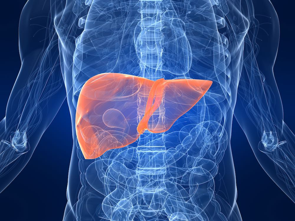 benefits of the liver